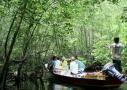 【バリ倶楽部】 レンボンガン島でマングローブ探検 & シュノーケリング